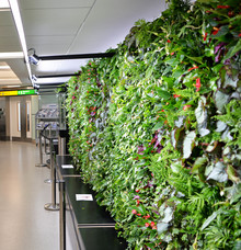 "The UK's first airport ""Garden Gate"" planted and growing at Heathrow's Terminal 3"